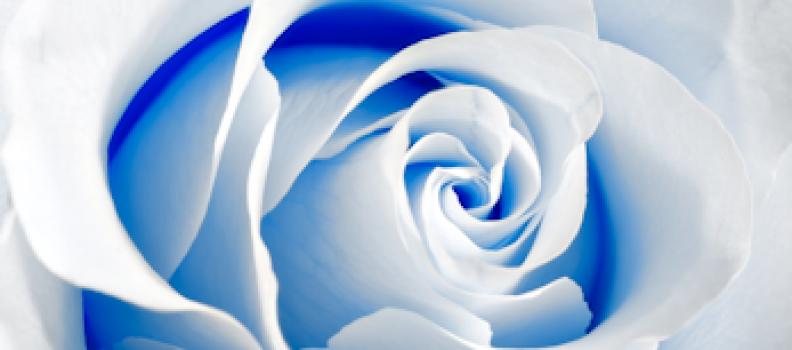 Rose of Bulgaria – un paradis al starii de bine