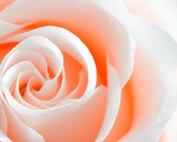 Cele mai iubite cosmetice din extract de trandafiri